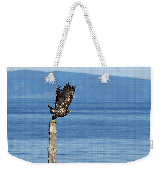 Juvenile Bald Eagle Taking Flight Weekender Tote Bag