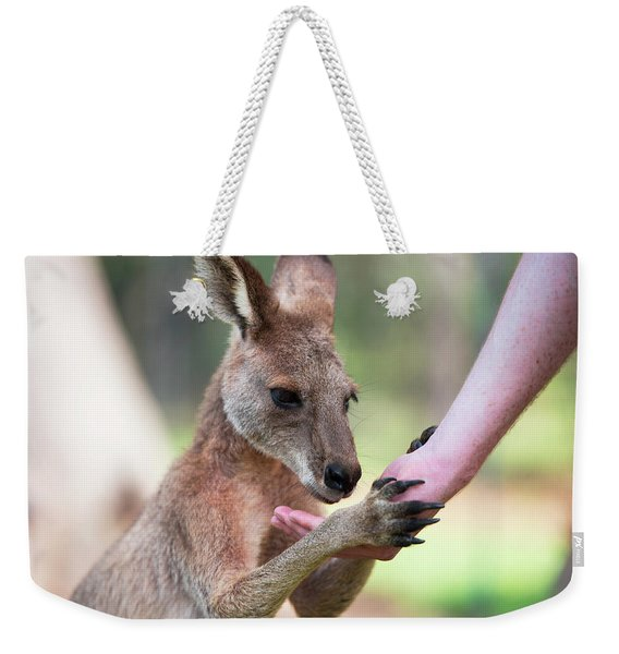 Weekender Tote Bag featuring the photograph Kangaroo by Rob D Imagery