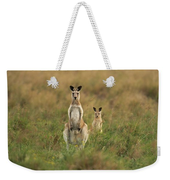 Weekender Tote Bag featuring the photograph Kangaroos In The Countryside by Rob D Imagery