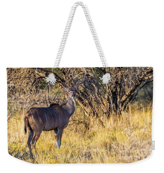 Kudu, Namibia Weekender Tote Bag
