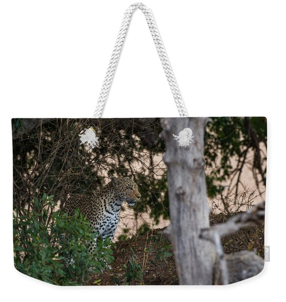 Weekender Tote Bag featuring the photograph LC1 by Joshua Able's Wildlife