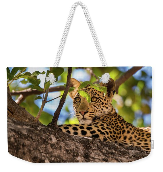 Weekender Tote Bag featuring the photograph Lc11 by Joshua Able's Wildlife