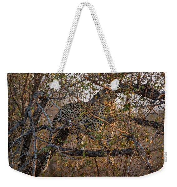 Weekender Tote Bag featuring the photograph LC6 by Joshua Able's Wildlife