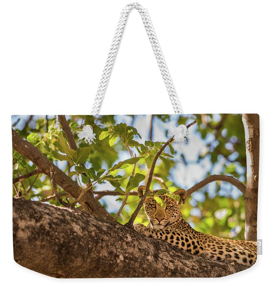 Weekender Tote Bag featuring the photograph LC9 by Joshua Able's Wildlife