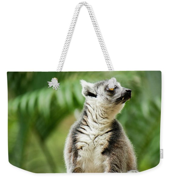 Weekender Tote Bag featuring the photograph Lemur By Itself Amongst Nature. by Rob D Imagery