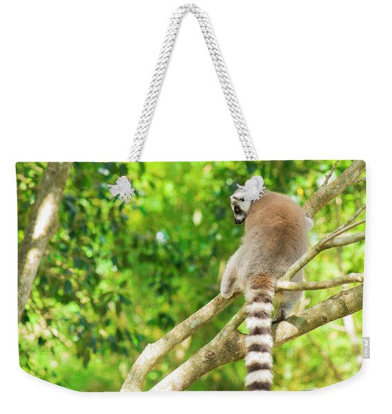 Lemur By Itself In A Tree During The Day. Weekender Tote Bag