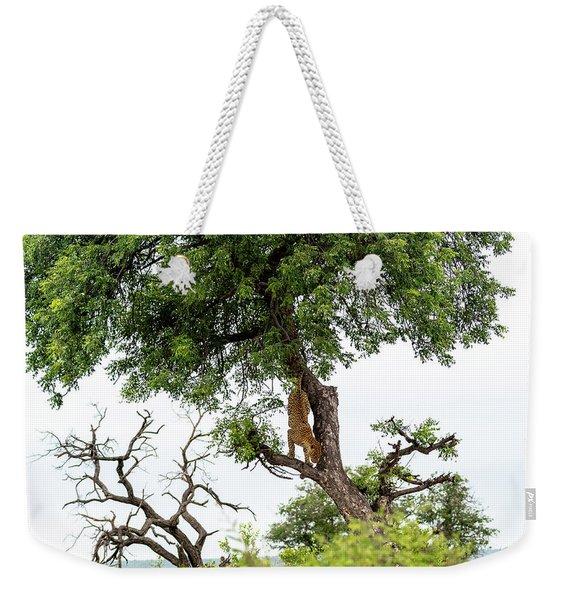 Leopard Descending A Tree Weekender Tote Bag