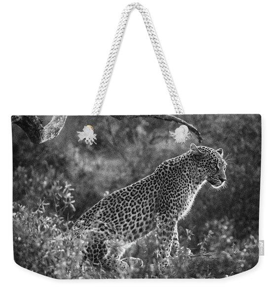 Leopard Sitting Black And White Weekender Tote Bag