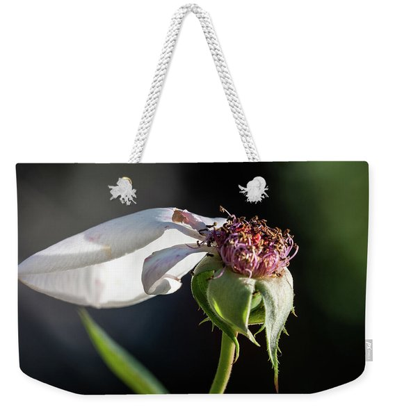 Weekender Tote Bag featuring the photograph Letting Go by Robin Zygelman