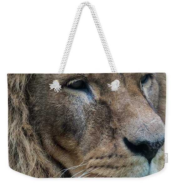 Weekender Tote Bag featuring the photograph Lion by Anjo Ten Kate