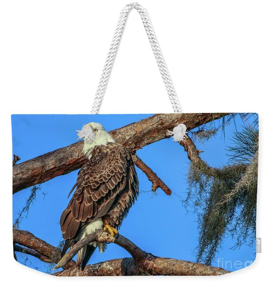 Weekender Tote Bag featuring the photograph Lookout Eagle by Tom Claud