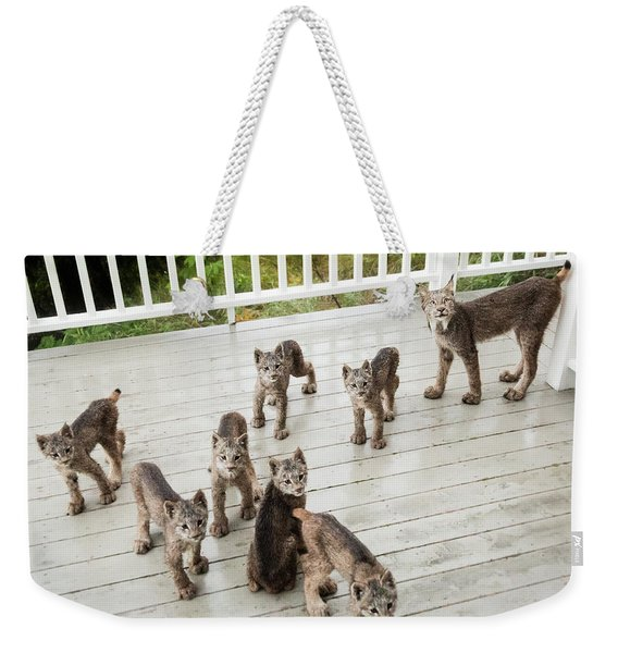 Weekender Tote Bag featuring the photograph Lynx Family Portrait 11x14 by Tim Newton