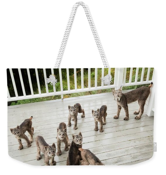 Weekender Tote Bag featuring the photograph Lynx Family Portrait by Tim Newton