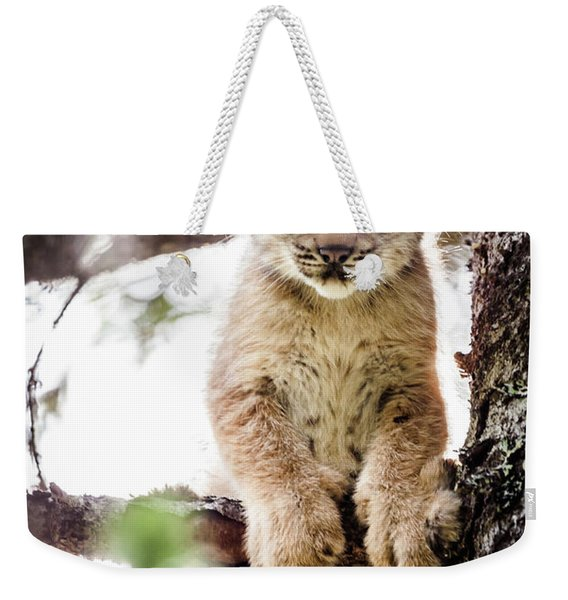 Weekender Tote Bag featuring the photograph Lynx Kitten In Tree by Tim Newton