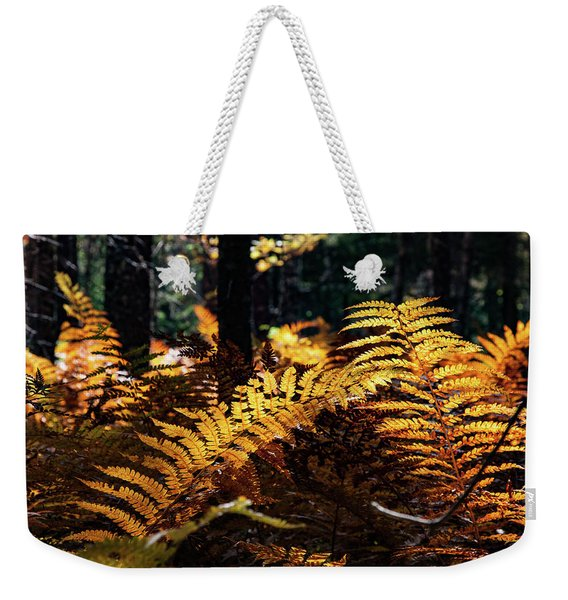 Weekender Tote Bag featuring the photograph Maine Autumn Ferns by Jeff Folger