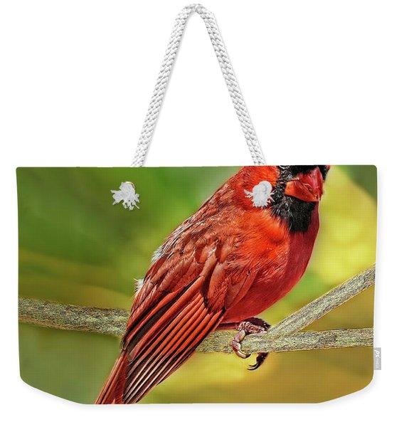 Male Cardinal Headshot  Weekender Tote Bag