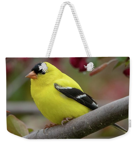 Male Goldfinch Checking Me Out Weekender Tote Bag