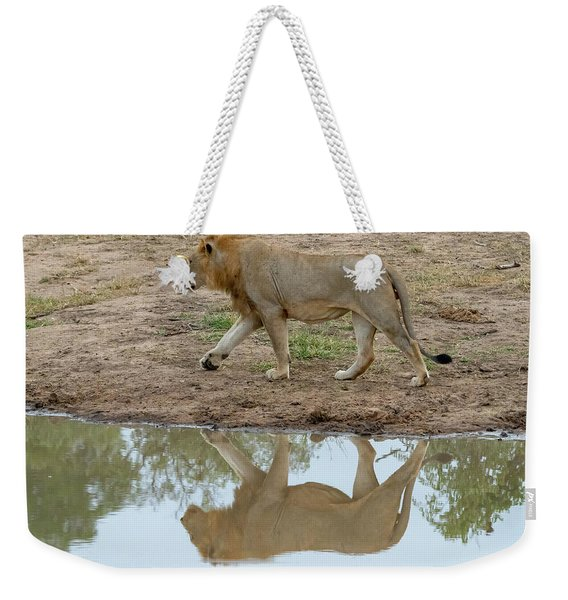 Male Lion And His Reflection Weekender Tote Bag