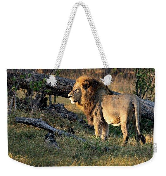 Male Lion In Botswana Weekender Tote Bag