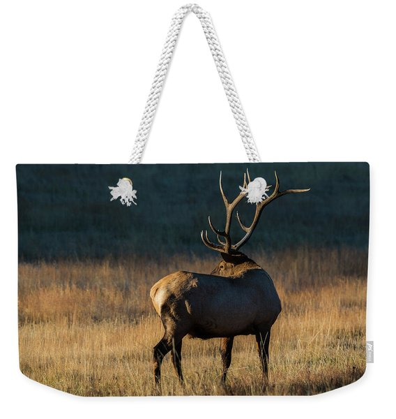 Weekender Tote Bag featuring the photograph ME3 by Joshua Able's Wildlife