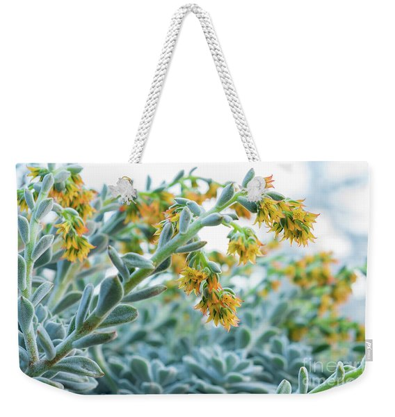 Mexican Echeveria In The  Morning Weekender Tote Bag