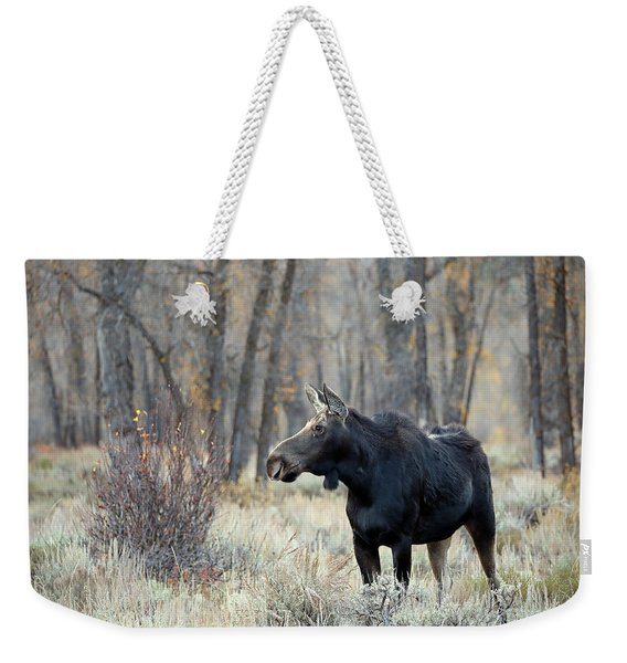 Moose Cow Study Weekender Tote Bag