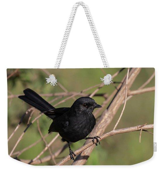 Northern Black Flycatcher Weekender Tote Bag