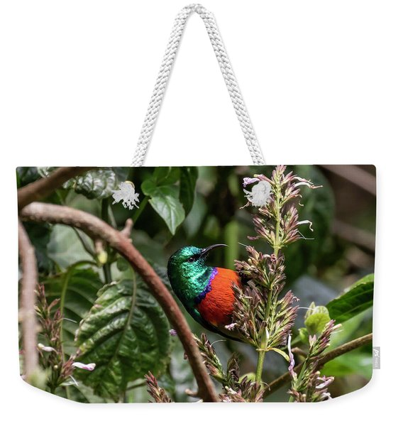 Northern Double-collared Sunbird Weekender Tote Bag