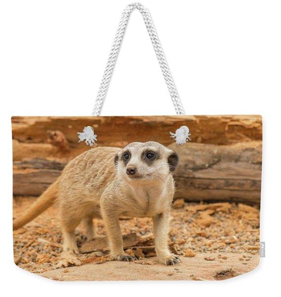 One Meerkat Looking Around. Weekender Tote Bag