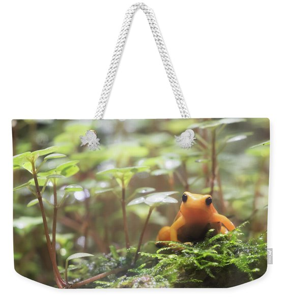 Weekender Tote Bag featuring the photograph Orange Frog. by Anjo Ten Kate