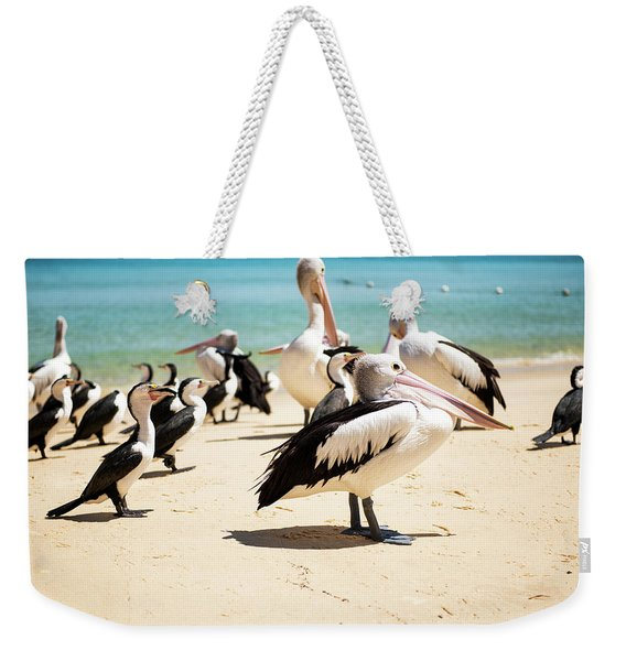 Weekender Tote Bag featuring the photograph Pelicans During The Day by Rob D Imagery