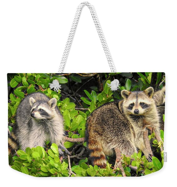 Raccoons In The Mangroves Weekender Tote Bag