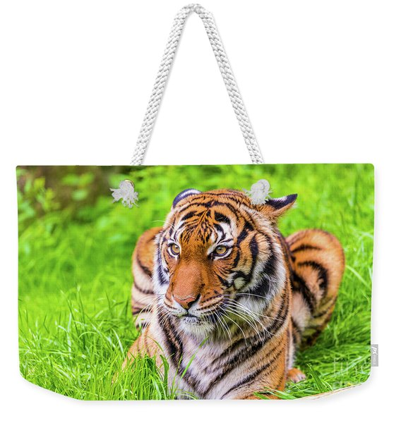 Weekender Tote Bag featuring the photograph Ready To Pounce by Dheeraj Mutha