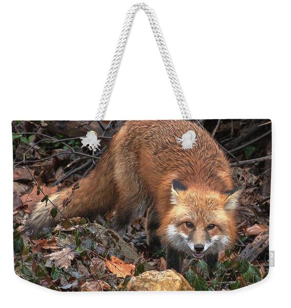 Red Fox Dmam0049 Weekender Tote Bag