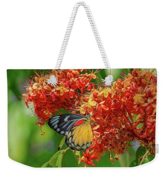 Red-spot Jezebel Butterfly Dthn0235 Weekender Tote Bag