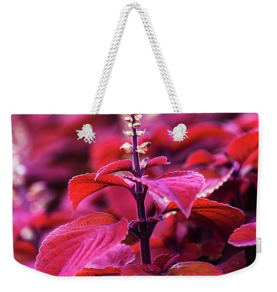 Weekender Tote Bag featuring the photograph Reds by Dheeraj Mutha