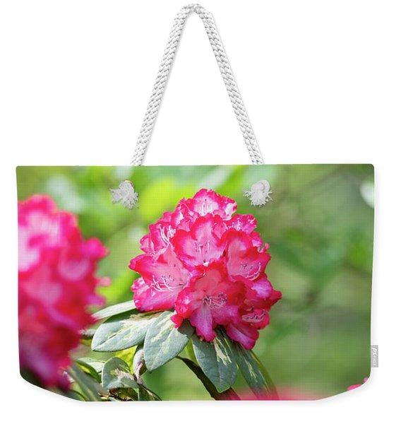Rhododendron President Roosevelt Flowering Weekender Tote Bag