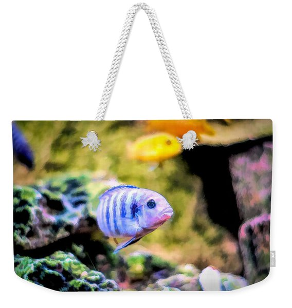 Weekender Tote Bag featuring the digital art Rock Cichlid Blue Zebra by Don Northup