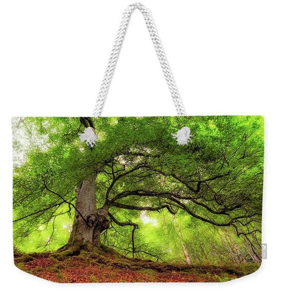 Roots Of Taymouth Estate - Scotland - Beech Tree Weekender Tote Bag