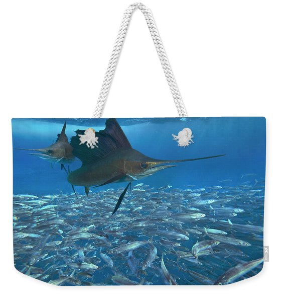 Sailfish Hunting Round Sardinella, Isla Weekender Tote Bag