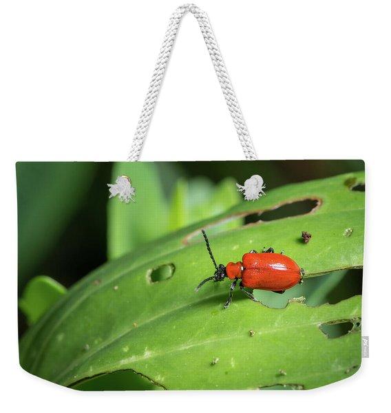 Scarlet Lily Beetle Sitting On A Green Leaf With Holes Weekender Tote Bag