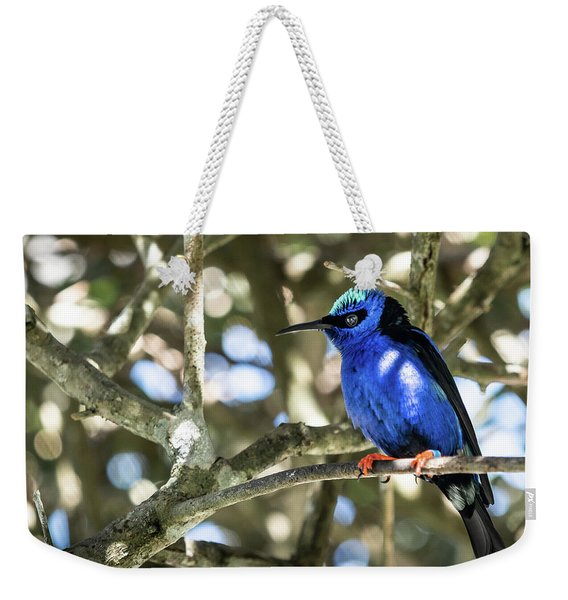 Weekender Tote Bag featuring the photograph Shades Of Blue by Robin Zygelman