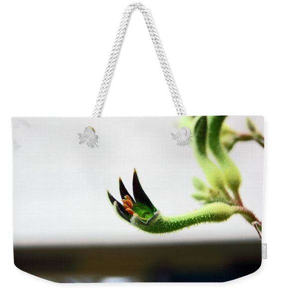 Sheffield. The Botanical Gardens Pavillions Weekender Tote Bag