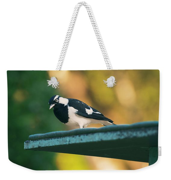 Small Magpie Lark Outside In The Afternoon Weekender Tote Bag