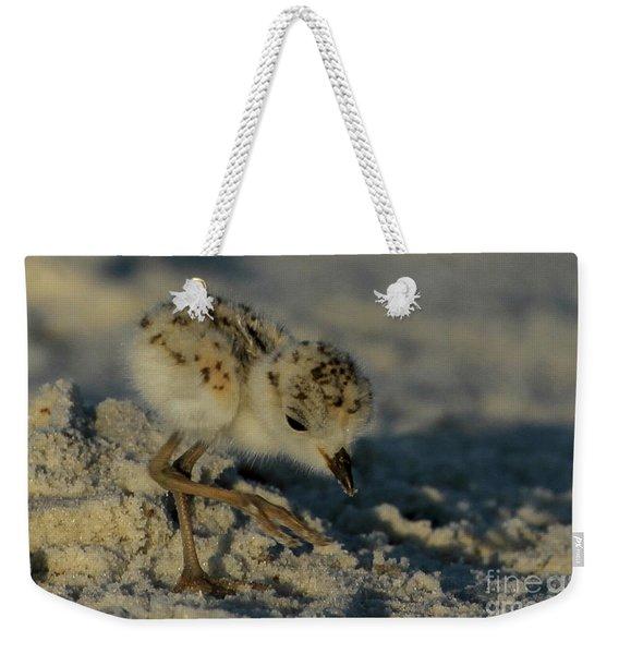 Snowy Plover On The Hunt Weekender Tote Bag