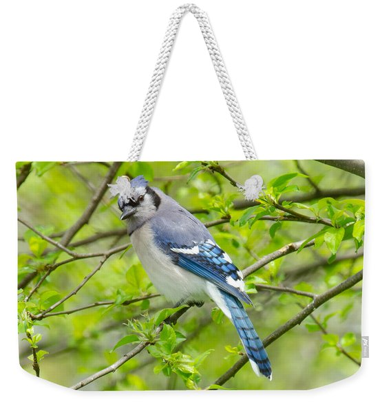 Springtime Bluejay Weekender Tote Bag