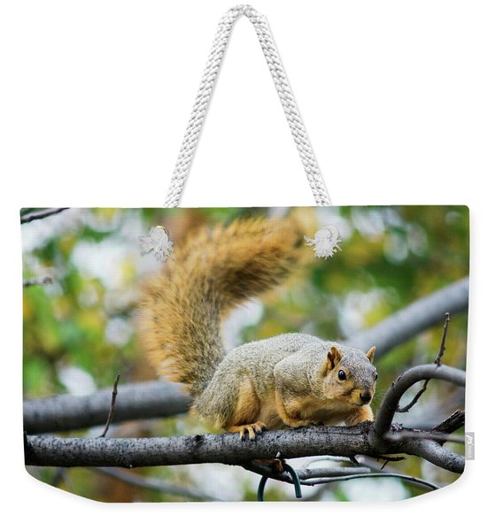 Squirrel Crouching On Tree Limb Weekender Tote Bag