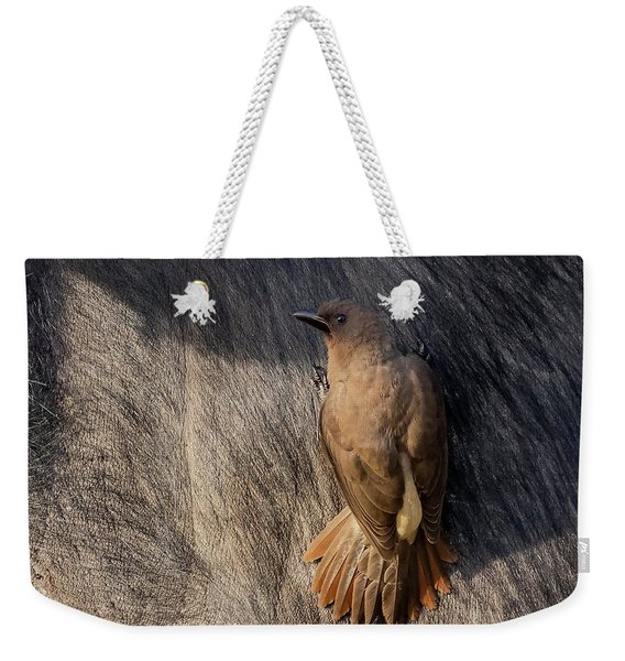 Sub-adult Yellow-billed Oxpecker On Cape Buffalo Weekender Tote Bag
