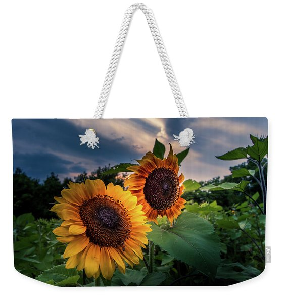 Sunflowers In Evening Weekender Tote Bag