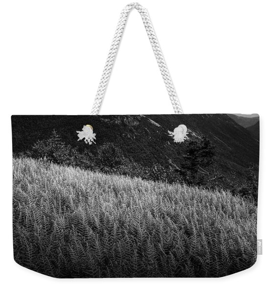 Weekender Tote Bag featuring the photograph Sunlight On Ferns, Mount Willard by Wayne King